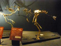20140212国立科学博物館/大恐竜展/ガルディミムス.jpg