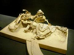 20140212国立科学博物館/大恐竜展/プロトケラトプスとヴェロキラプトルの格闘.jpg