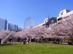 20140403桜木町の桜4.jpg