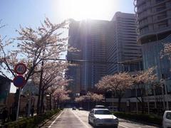 20140403桜木町の桜6.jpg