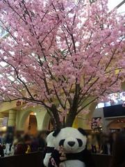 20140405上野駅の桜の飾り.jpg