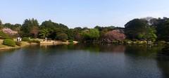 20140409新宿御苑の桜8.jpg
