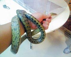 おきなわワールド・手巻き蛇