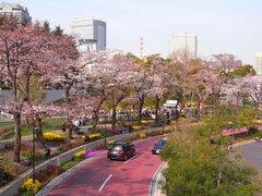 ミッドタウンの桜2.jpg