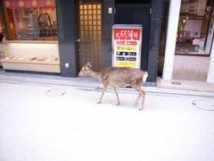 宮島・街中にも鹿