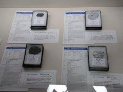 月の隕石.jpg