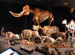 骨格標本.jpg