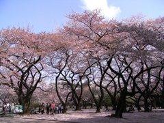 桜園地.jpg