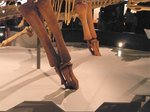 三つ指恐竜