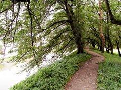 山形城土塁の上の道.jpg