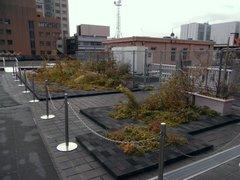 神奈川県庁本庁舎屋上庭園.jpg