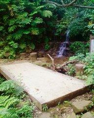 西表島の山道・橋.jpg