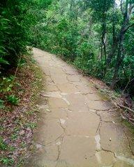 西表島の山道・石畳.jpg