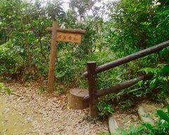西表島の山道・展望台近く