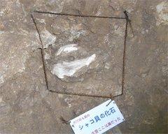石垣島鍾乳洞化石