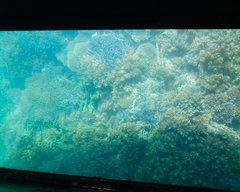 川平湾グラスボート底1