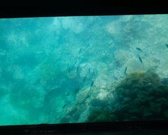 川平湾グラスボート底2