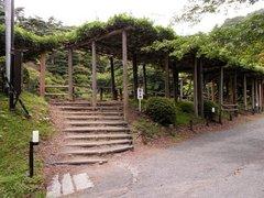 二本松城霞ヶ池と藤棚.jpg