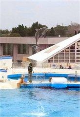 美ら海水族館・イルカのハイジャンプ.jpg
