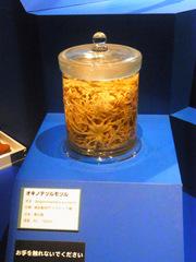 オキノテヅルモヅル.jpg