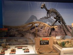 サイパル・恐竜展3.jpg