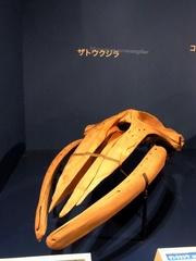 ザトウクジラの頭蓋骨.jpg