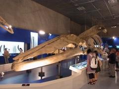 シロナガスクジラ.jpg