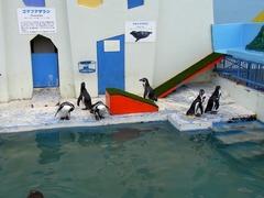 ノシャップ岬・水族館・ペンギン.jpg