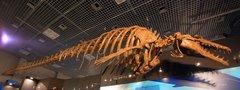 バシロサウルス(鯨の祖先).jpg