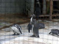 小諸城・動物園・ペンギン.jpg