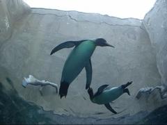 旭山動物園・ペンギン2.jpg