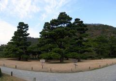 栗林公園・お手植松.jpg