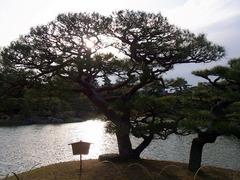 栗林公園・夫婦松.jpg