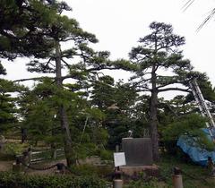 玉藻公園・昭和天皇お手植松.jpg