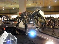 福島県立博物館/アロサウルス.jpg