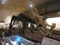 福島県立博物館/トリケラトプス.jpg