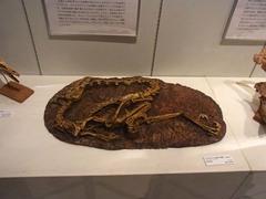 福島県立博物館/ヴェロキラプトル.jpg
