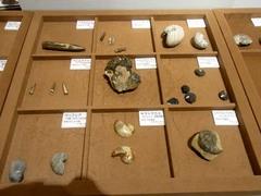 福島県立博物館/化石に触ってみる.jpg