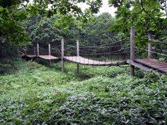 釧路湿原・湿原展望遊歩道・吊り橋.jpg