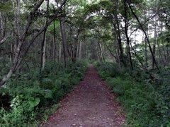 釧路湿原・遊歩道2.jpg