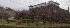 高知城・梅の段.jpg