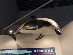 鯨目.jpg