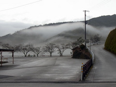 龍河洞・霧.jpg
