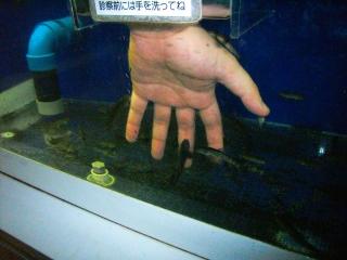 のとじま水族館・ドクターフィッシュ.jpg