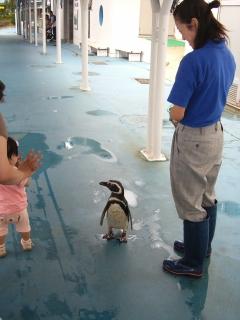 のとじま水族館・ペンギン.jpg