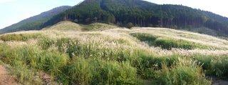 仙石原パノラマ.jpg