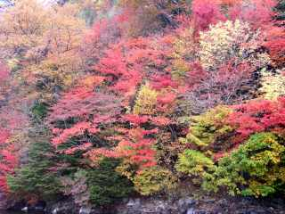中禅寺湖の紅葉.jpg