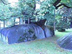 石割桜・石の割れ目.jpg