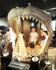 美ら海水族館・サメの歯.jpg