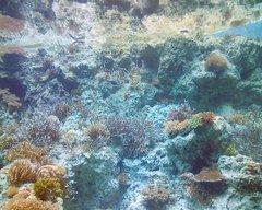 美ら海水族館・サンゴの海1.jpg